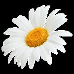 White_Flower_img